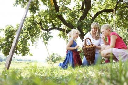 Marillenernte Frau mit Kinder